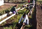 Centro Municipal Universitario de La Palma aportando a la producción de alimentos con ciencia en tiempos de Covid