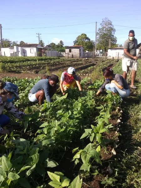 Centro Universitario Municipal de La Palma sigue apostando por la producción de alimentos